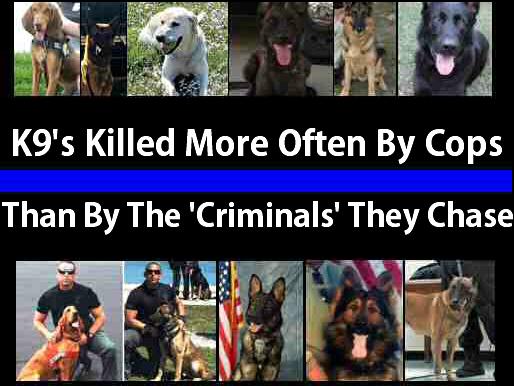 Police Kill More K9's Than Anyone Else